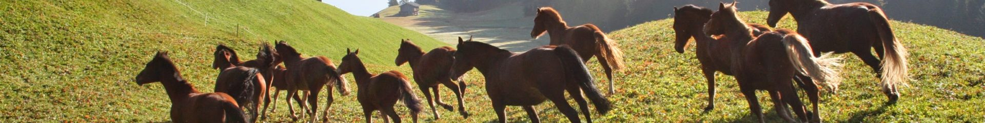 Pferdepension Furna